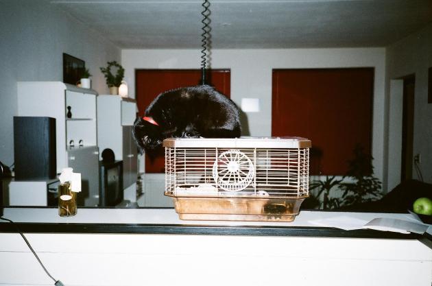 Smokey en de hamster.jpg