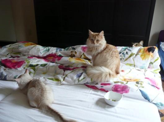 gisteravond, moe. Zaina zo lief. Let op onze pop-up Noor achter het bed, haha...