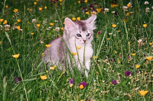 Djemo in het gras